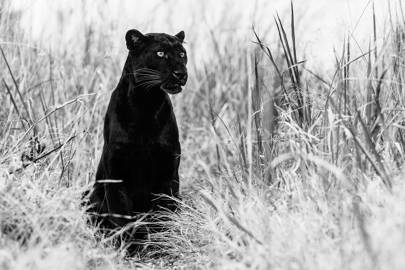 9 incredible images from the world's leading wildlife photographer, David Yarrow