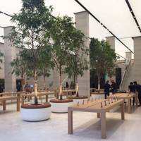 "The new Apple Store Regent Street features 12""Ficus Ali"" trees"