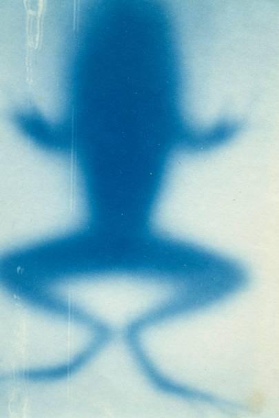 X-Ray Cyanotypes attributed to Elizabeth Fleischner, 1899.