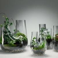 Terrariums by Tom Dixon