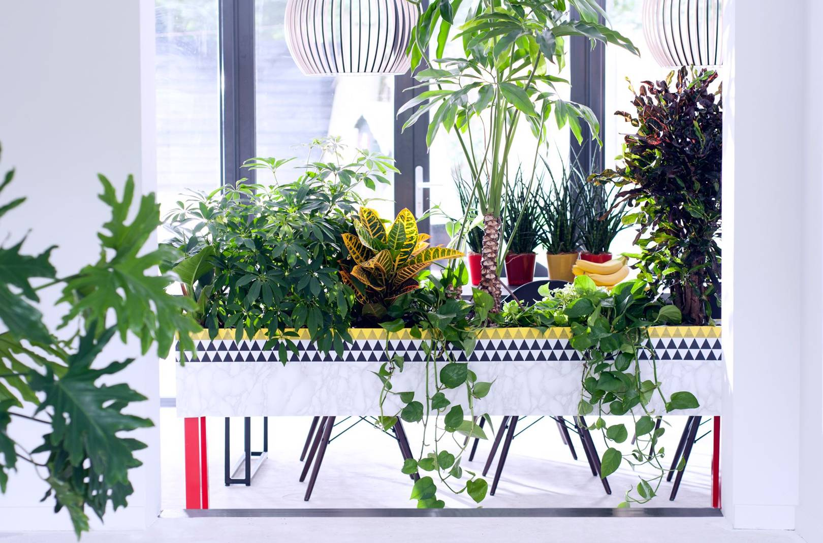 10 cool house plants to grow inside | British GQ