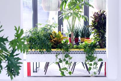 10 Cool House Plants To Grow Inside