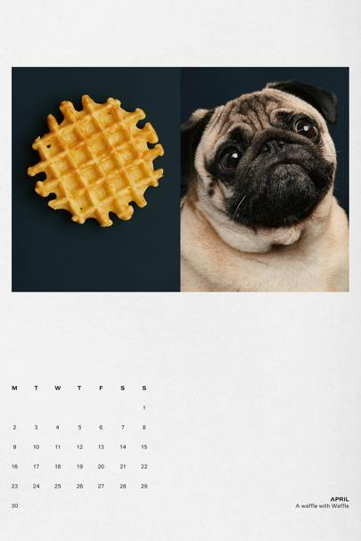 The Gourmand Dog Eat Dog calendar