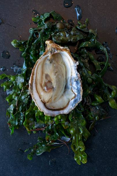 4. Oyster happy hour at Ondine