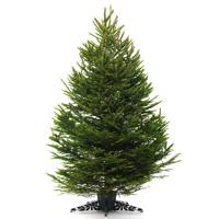 3. The Christmas tree dilemma