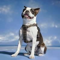 Hiro + Wolf x Dashing Tweeds dog harness