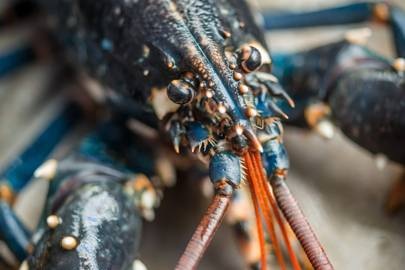 Consider the lobster david foster wallace essay