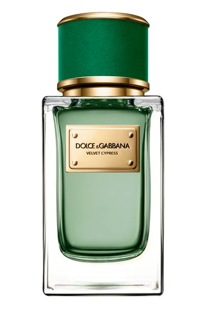 Best New Fragrance in Limited Distribution: Velvet Cypress by Dolce & Gabbana