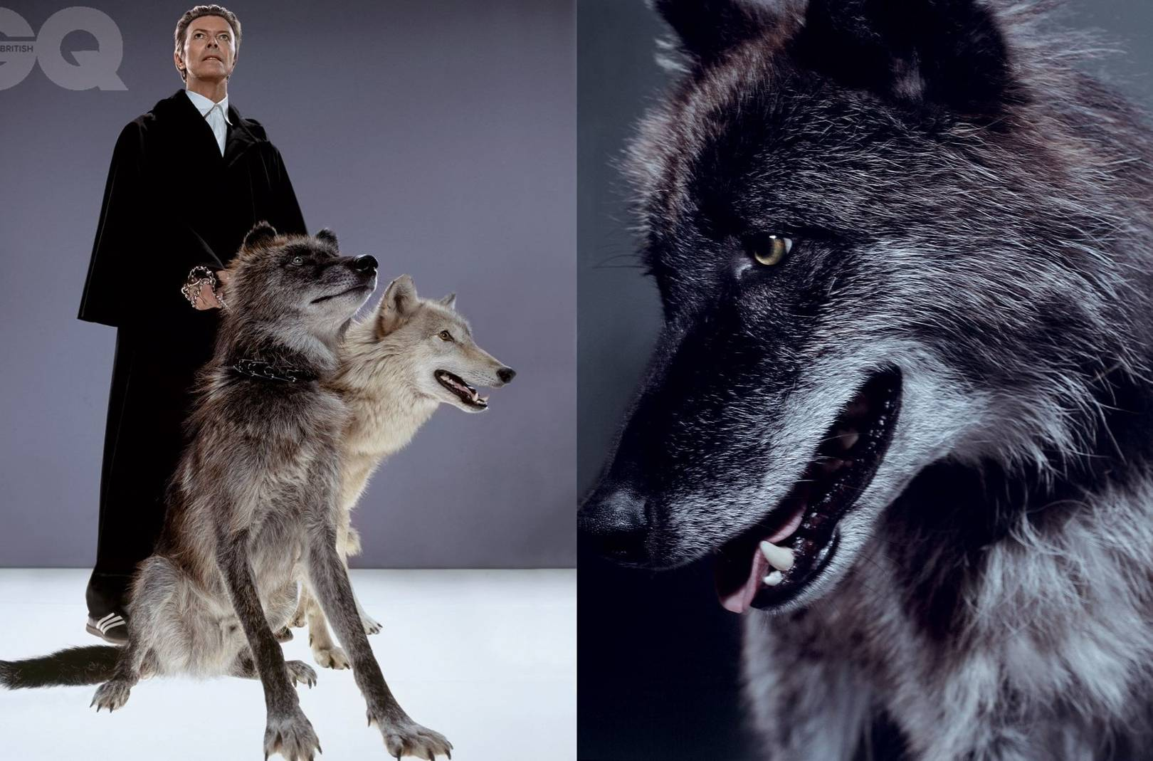 how we photographed david bowie with wild wolves british gq